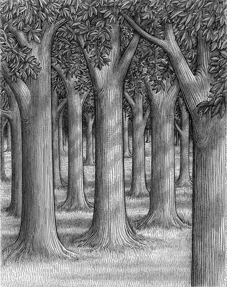 рисунки для срисовки лес карандашом