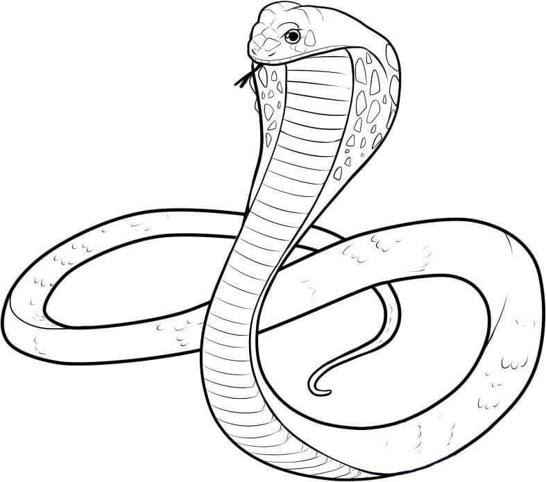 срисовка змеи карандашом