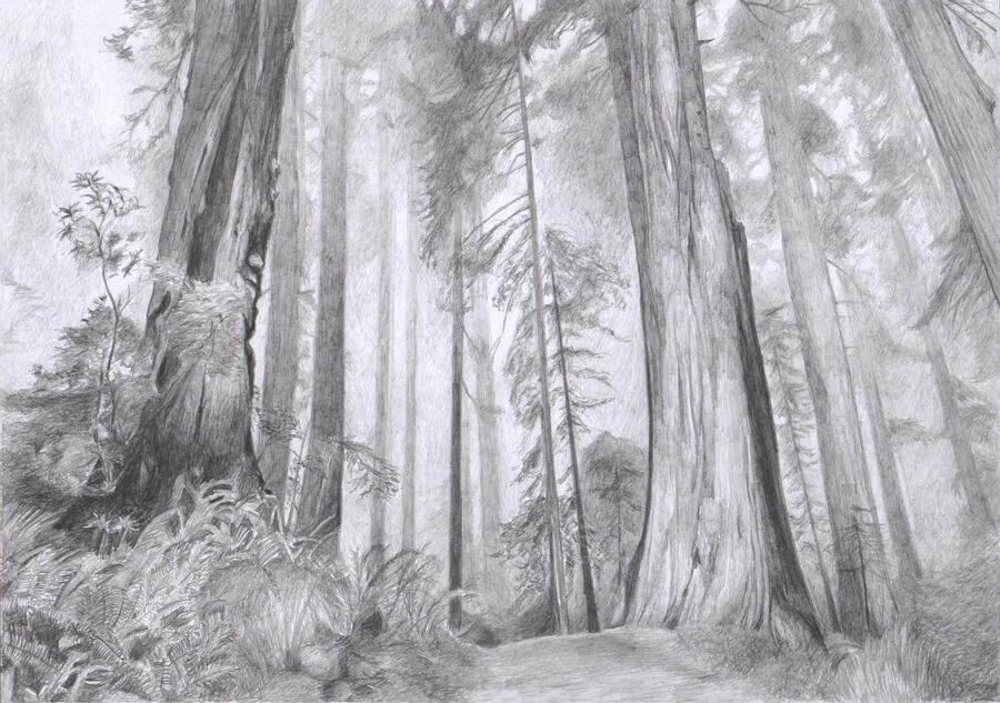 рисунки для срисовки лес простые