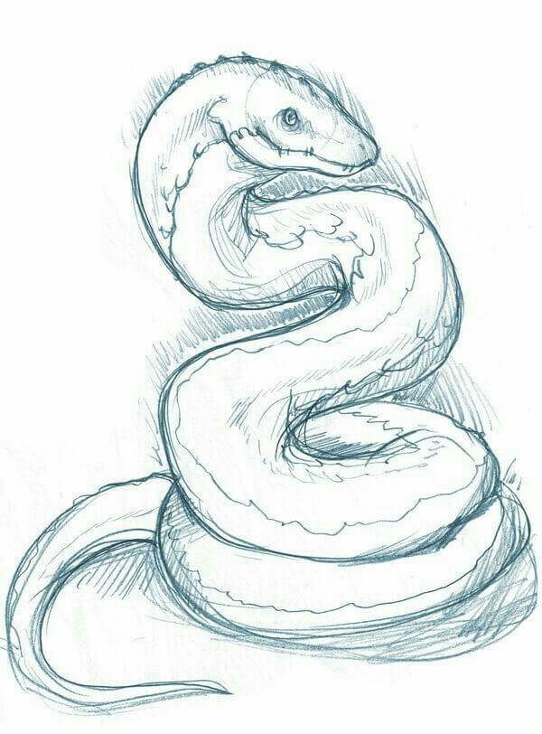 срисовка змеи цветная