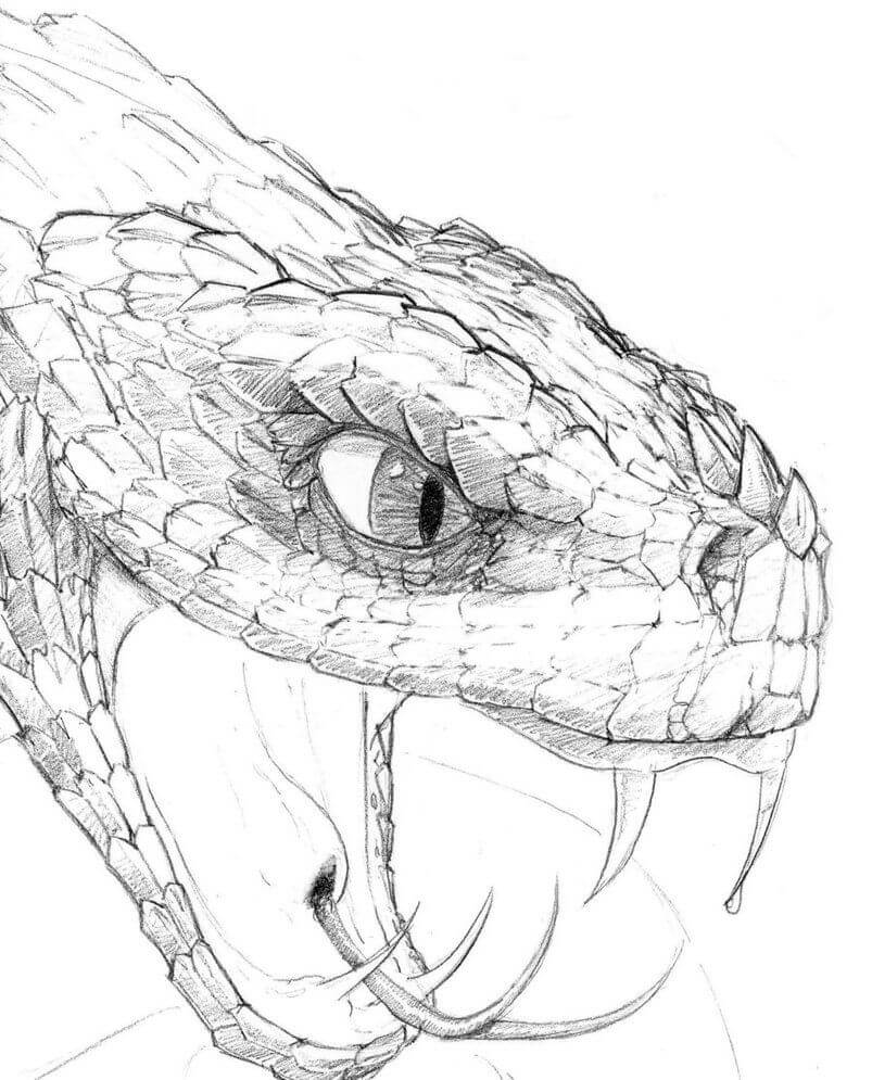 картинки змей для срисовки
