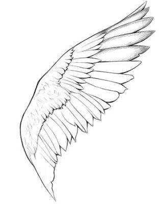 крылья для срисовки