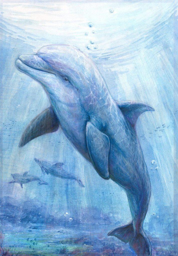 дельфин для срисовки