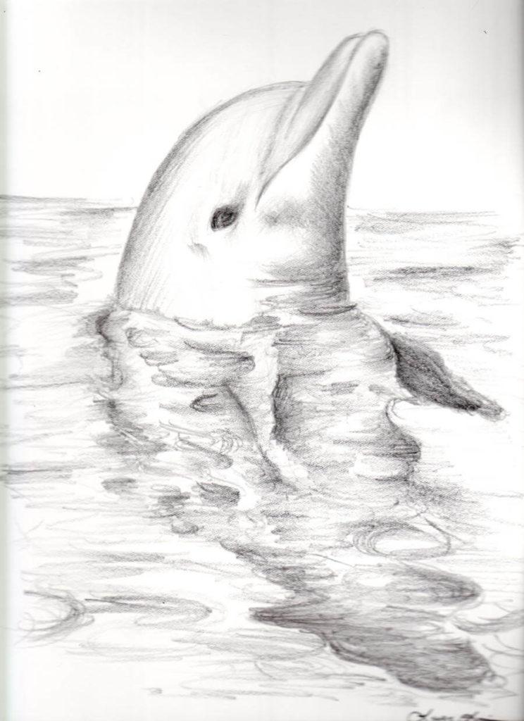 дельфин для срисовки карандашом