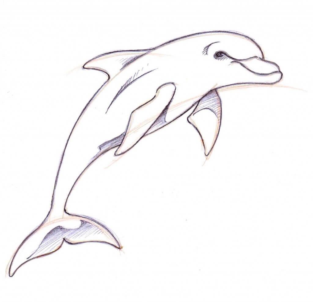 дельфин для срисовки простые