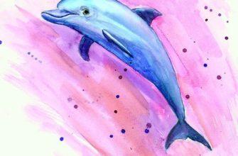 дельфин для срисовки цветные