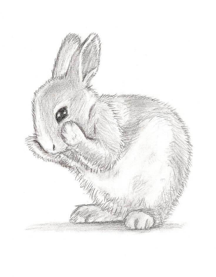 кролик для срисовки