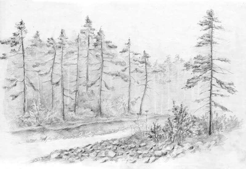 рисунки для срисовки лес легкие