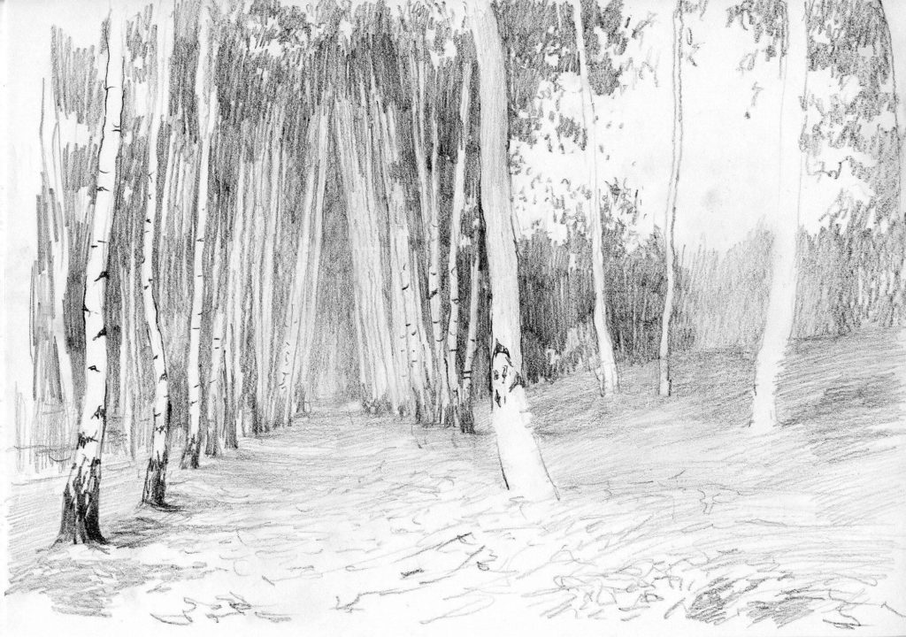 рисунки для срисовки лес начинающим