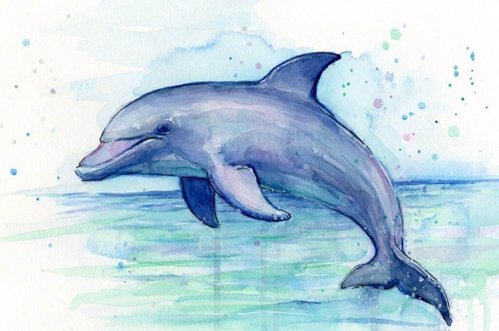 дельфин для срисовки цветной