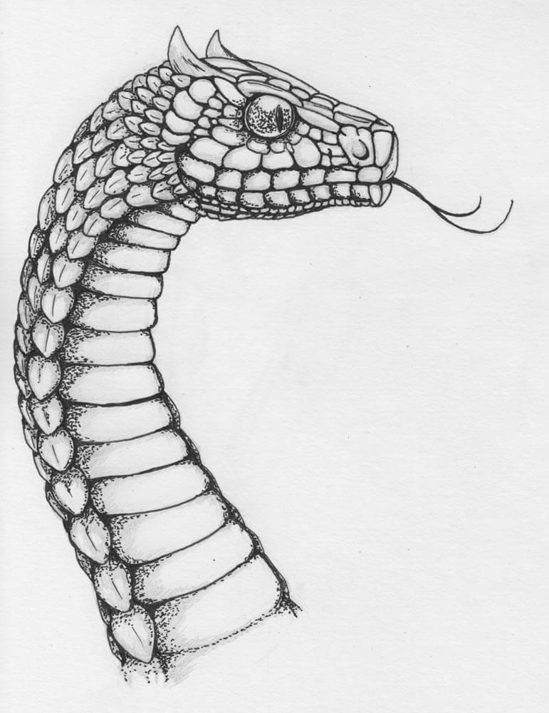 срисовка змеи с языком